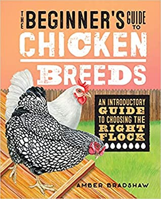 The Beginner's Guide to Chicken Breeds
