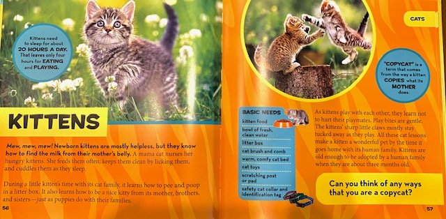 kitten page from Little Kids First Big Book of Pets